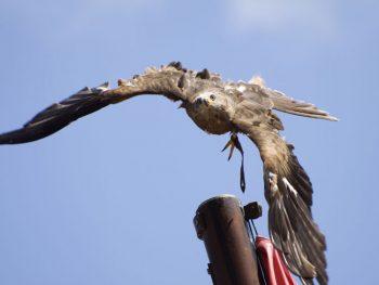 eagle-773961