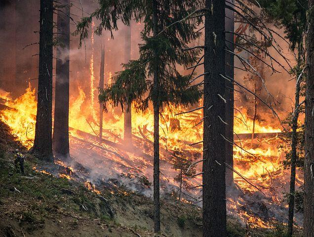 skogsbrnad