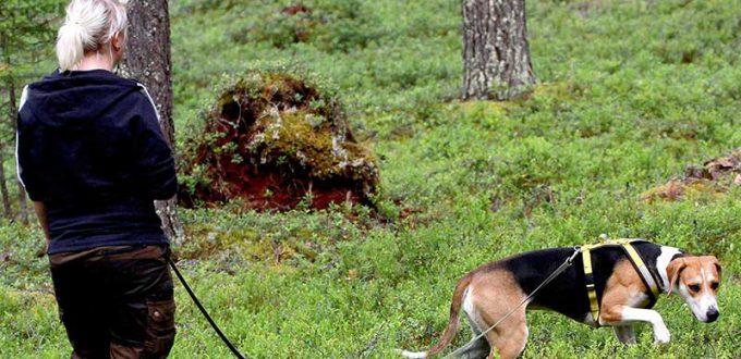 Hundskolan viltspårträning